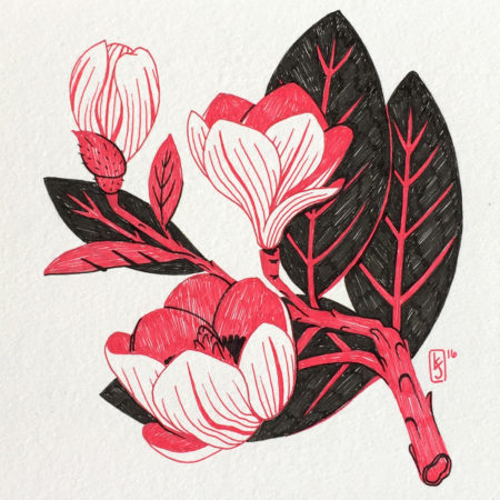 magnolia_edo_1