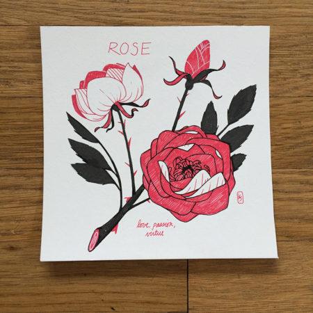 EDO_Rose 1