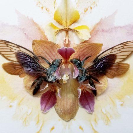 alessandradzuba_orchidsbees