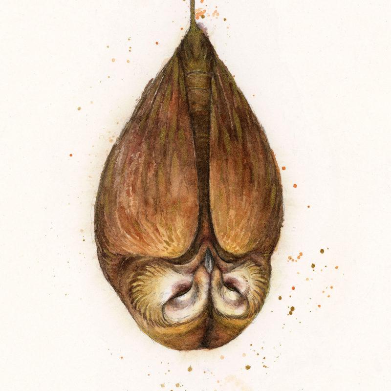 Owlfaery - by Iris Compiet